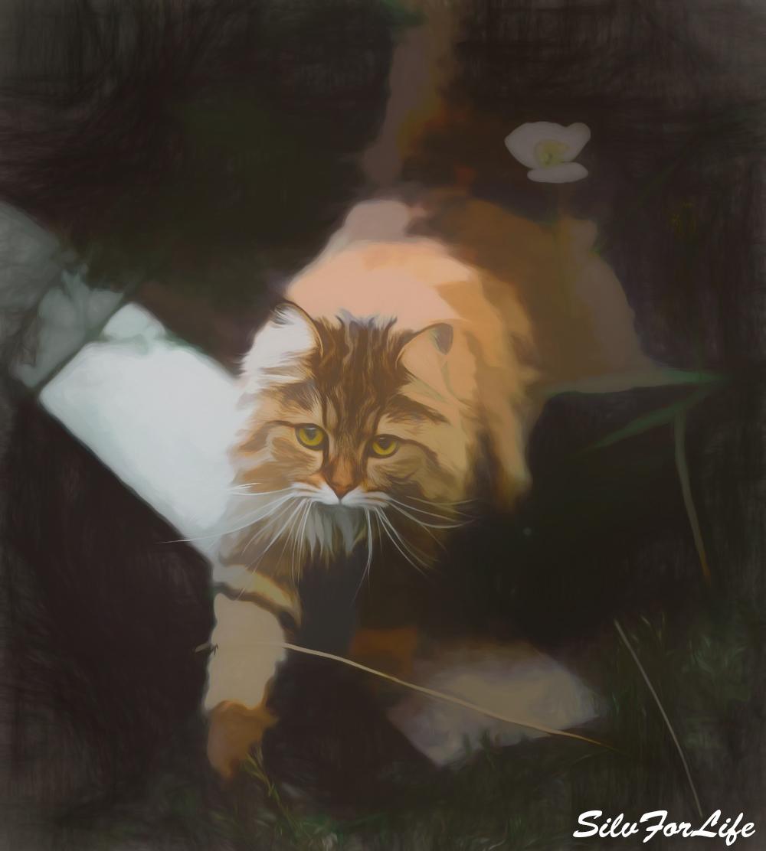 Cat in garden - Paint