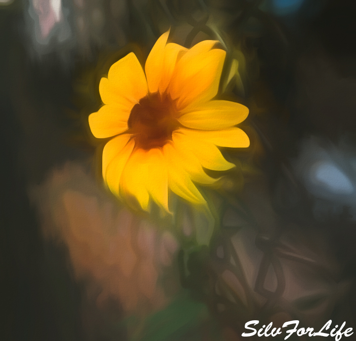 Little Sunflower in middle of city garden - Paint